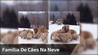 Família De Cachorros Se Divertindo Na Neve, Olha Quantos Filhotes!