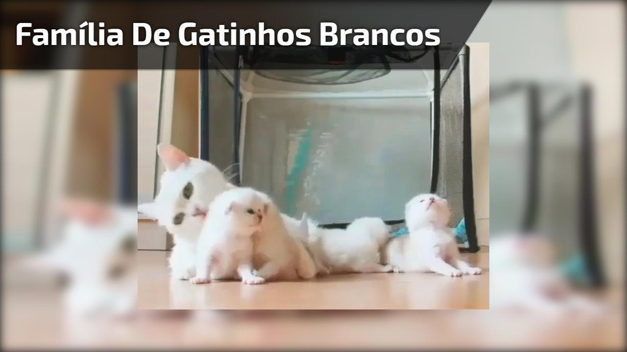 Família de gatinhos brancos