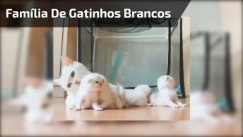 Família De Gatinhos Branquinhos, Uma Linda Família Para Compartilhar!