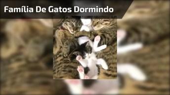 Família De Gatinhos Tirando Uma Soneca, Olha Só Que Coisa Mais Linda!