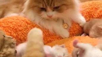 Família De Gatos Amarelos, Você Vai Se Apaixonar Por Cada Um!