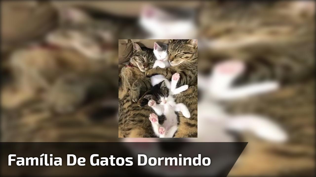 Família de gatos dormindo