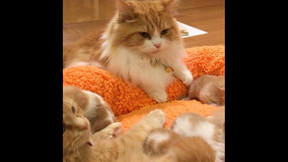 Família de Gatos feliz