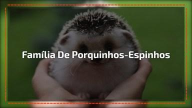 Família De Porquinhos-Espinhos Mais Fofa Que Você Vai Ver Hoje!