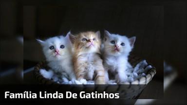 Família Linda De Gatinhos, Você Vai Se Apaixonar, Confira E Compartilhe!