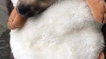 Fantasia De Porco Espinho Para Cachorro, Olha Só Que Engraçadinho!