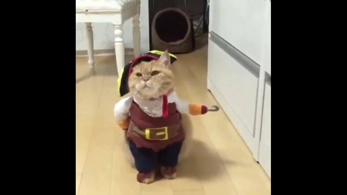 Fantasia super divertida para gato