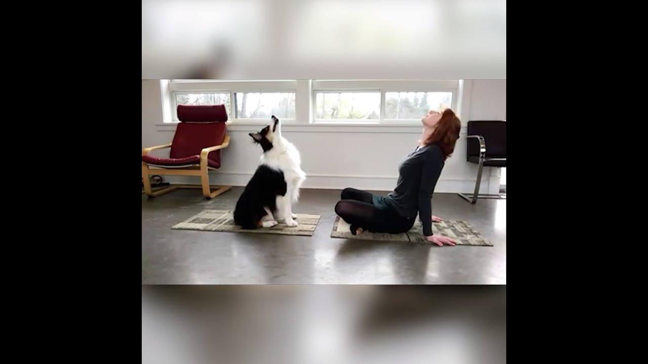 Fazendo exercícios com seu cachorro