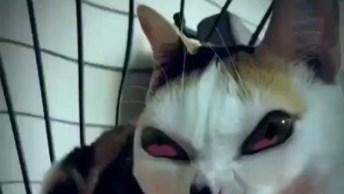 Fazendo Vídeos Com Efeitos Em Gatos, Ficou Bem Engraçado Isso Hahaha!