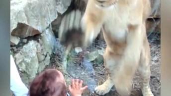 Felinos E Suas Reações Mais Engraçadas Nos Zoológicos