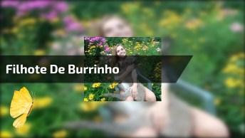 Filhote De Burrinho Ganhando Colo, Olha Só Que A Folga Dele!