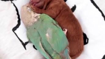 Filhote De Cachorrinho Com Papagaio, Olha Só Que Linda Imagem!