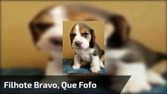 Filhote De Cachorrinho Mais Fofinho Que Você Já Viu, Olha Só A Braveza!