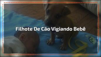 Filhote De Cachorrinho Vigiando Bebê, Olha Só Que Coisinha Mais Fofa!