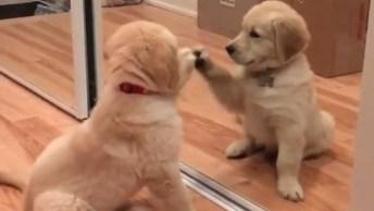 Filhote De Cachorro Brincando Com A Própria Imagem, Muito Fofinho!