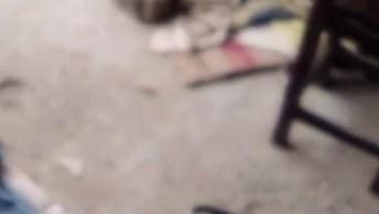 Filhote De Cachorro Brincando Com Seu Brinquedo De Corda, Que Fofura!