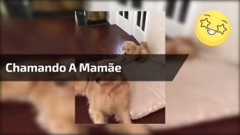 Filhote De Cachorro Chamando A Mamãe Para Brincar, Confira Que Fofura!