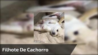 Filhote De Cachorro Com A Barriguinha Para Cima, Olha Só Que Fofura!