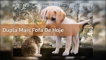 Filhote De Cachorro Com Filhote De Gato, Uma Dupla Muito Doce!