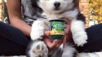Filhote De Cachorro Comendo Iogurte, Que Fofinho Gente, Confira!