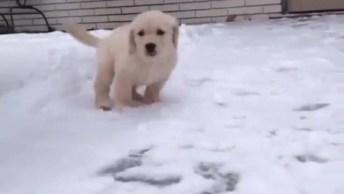 Filhote De Cachorro Conhecendo A Neve Pela Primeira Vez, Que Fofura!