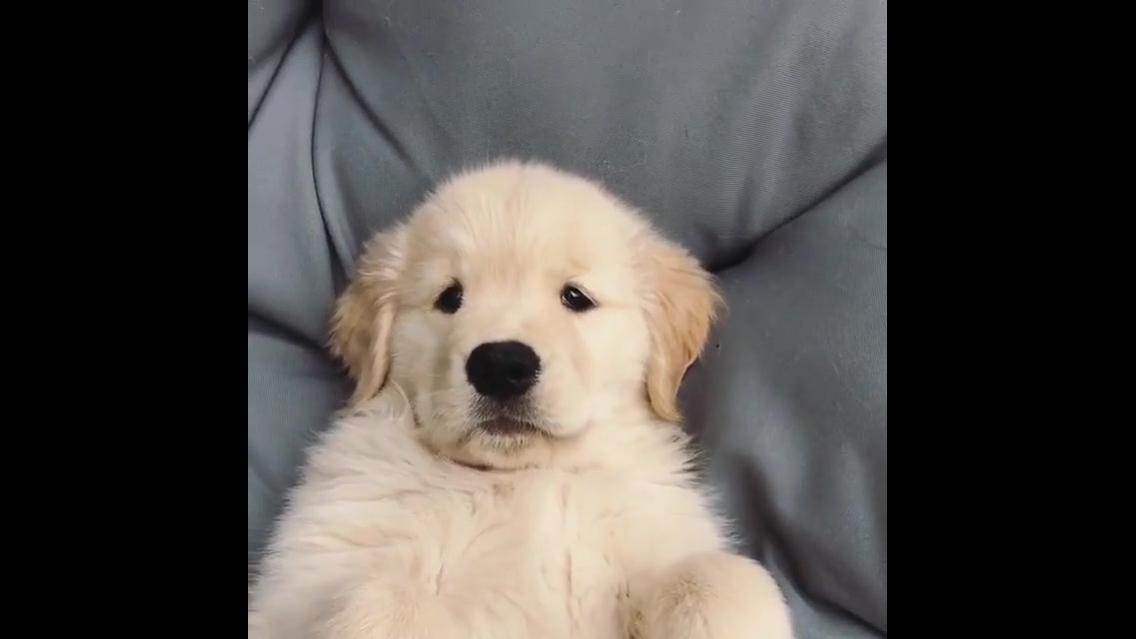 Filhote de cachorro deitado de barriga para cima
