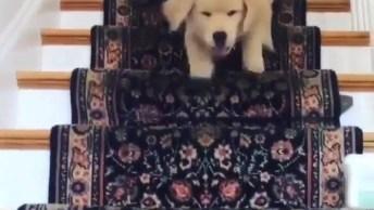 Filhote De Cachorro Descendo As Escadas Em Encontro De Seu Dono!