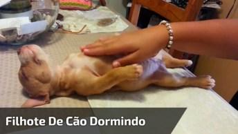 Filhote De Cachorro Dormindo, Olha Só A Preguiça Deste Amiguinho!