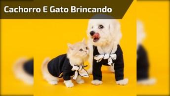 Filhote De Cachorro E Gato Brincando No Quintal, É Muito Amor!