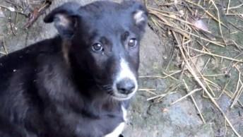 Filhote De Cachorro É Resgatado De Poço Pela Equipe De Animal Aid Unlimeted!