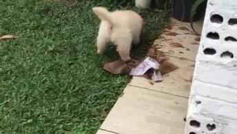 Filhote De Cachorro Faz Uma Bagunça Com O Barro, E Ainda Sai Pulando De Alegria!