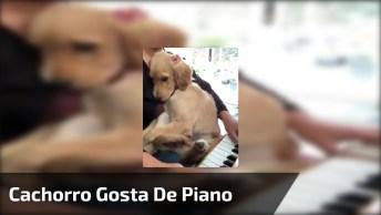 Filhote De Cachorro Fica Quietinha No Colo De Sua Dona Enquanto Ela Toca Piano!