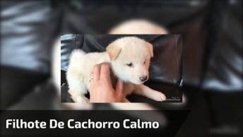 Filhote De Cachorro Fofinho, Super Calminho, Olha Só Que Lindinho!