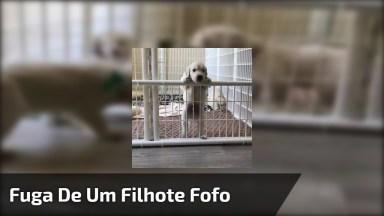Filhote De Cachorro Fugindo De Cercadinho, Olha Só A Técnica Dele!