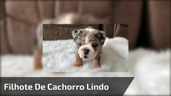 Filhote De Cachorro Mais Lindo E Diferente Que Vai Ver Hoje, Confira!