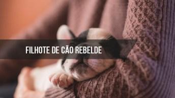 Filhote De Cachorro Mais Rebelde Do Dia, Veja Como Ele Enfrenta A Mãe!