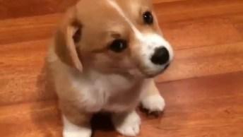 Filhote De Cachorro Olhando Para Câmera, Veja Esta Carinha Linda!