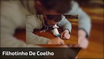 Filhote De Coelho Nasceu Sem Pernas Traseiras E Ganhou Uma Adaptação!