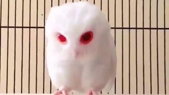 Filhote De Coruja Albina Com Olhos Vermelhos, Que Coisa Mais Linda!