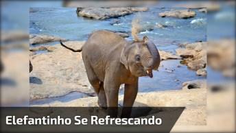 Filhote De Elefante Em Santuário Entrando E Saindo De Pequena Piscina!