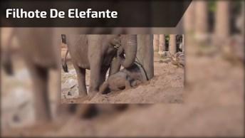 Filhote De Elefante Fica Preso Na Areia, Mais Depois Consegue Sair!
