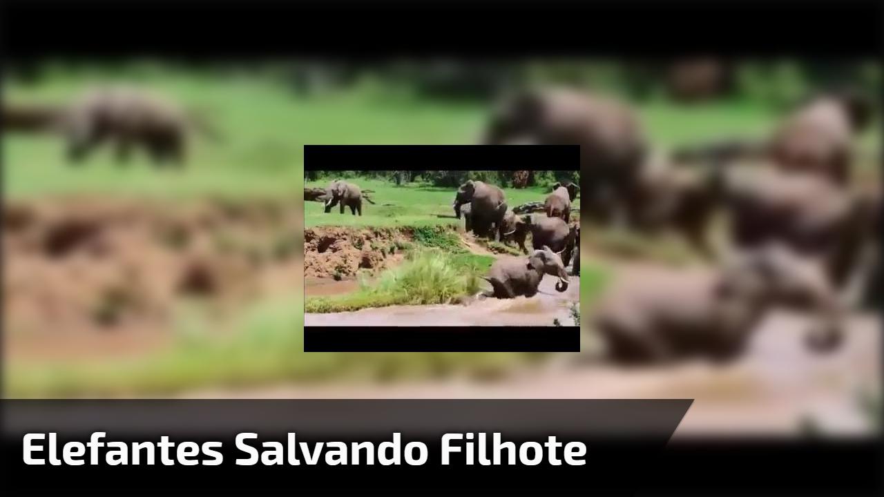 Elefantes salvando filhote