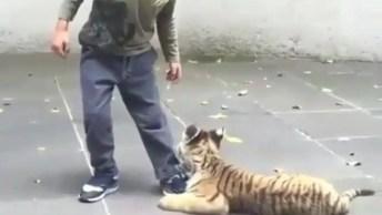 Filhote De Felino Abraçando O Pé De Garotinho, Como Se Pedisse Para Ele Não Ir!