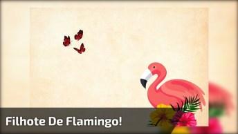 Filhote De Flamingo, Já Tinha Visto Um Desse? Confira E Compartilhe!