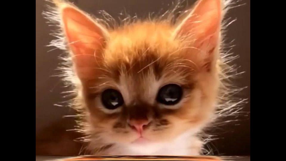 Filhote de gatinho amarelo