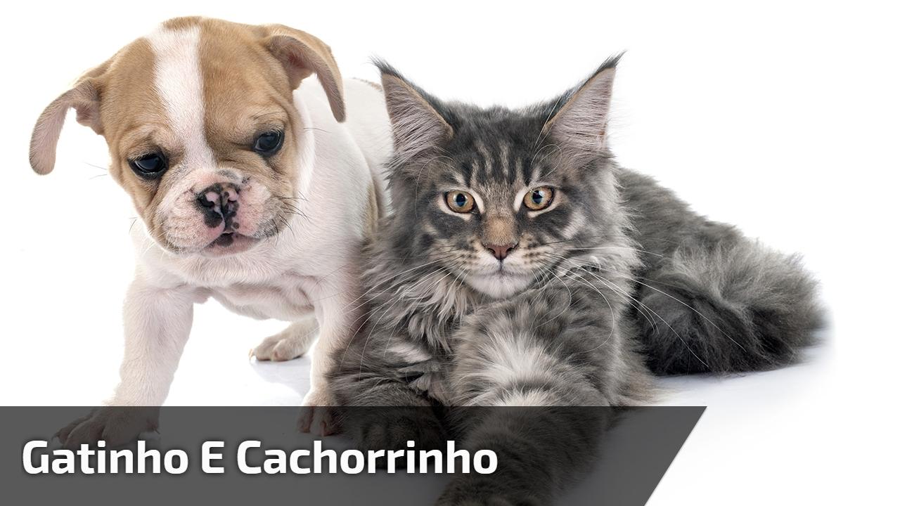 Gatinho e cachorrinho
