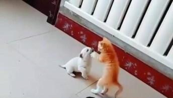 Filhote De Gatinho Com Cachorrinho Se Conhecendo, Olha Só Que Fofura!