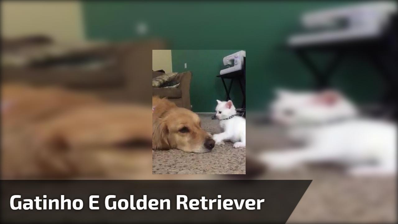 Gatinho e golden retriever