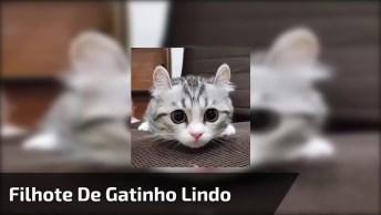 Filhote De Gatinho Mais Lindo Que Você Já Viu, Envie Para As Amigas Este Gato!