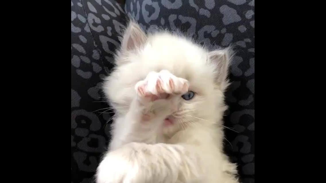 Filhote de gatinho para alegrar o seu dia